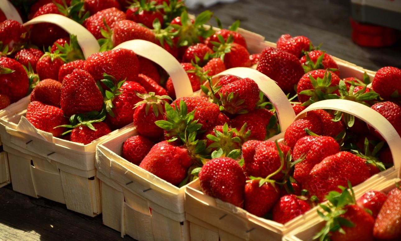 Beerenglück Erdbeerfeld
